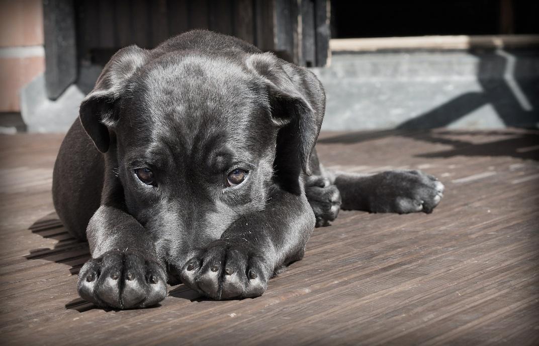 Cute puppy that is a little shy