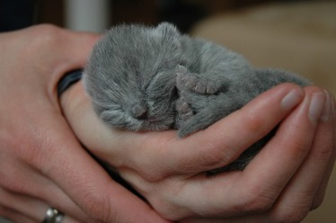 ARK Fund Family welcome newborn kittens
