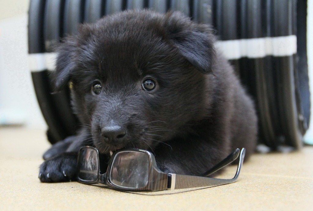 A puppy sponsor for ARK fund