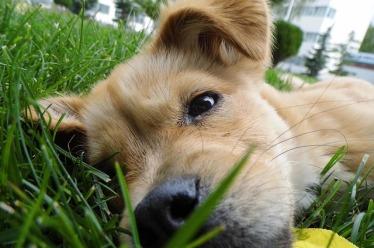 Cute puppy cuddling in the grass
