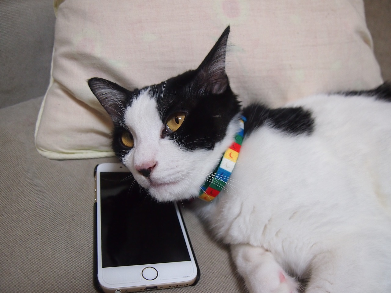 Cat owner loves using pet-friendly mobile apps